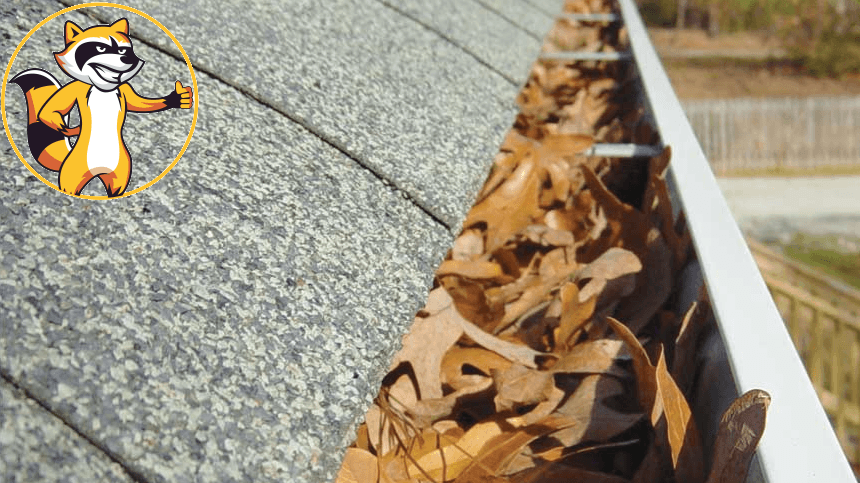 10 reasons to clean your gutters